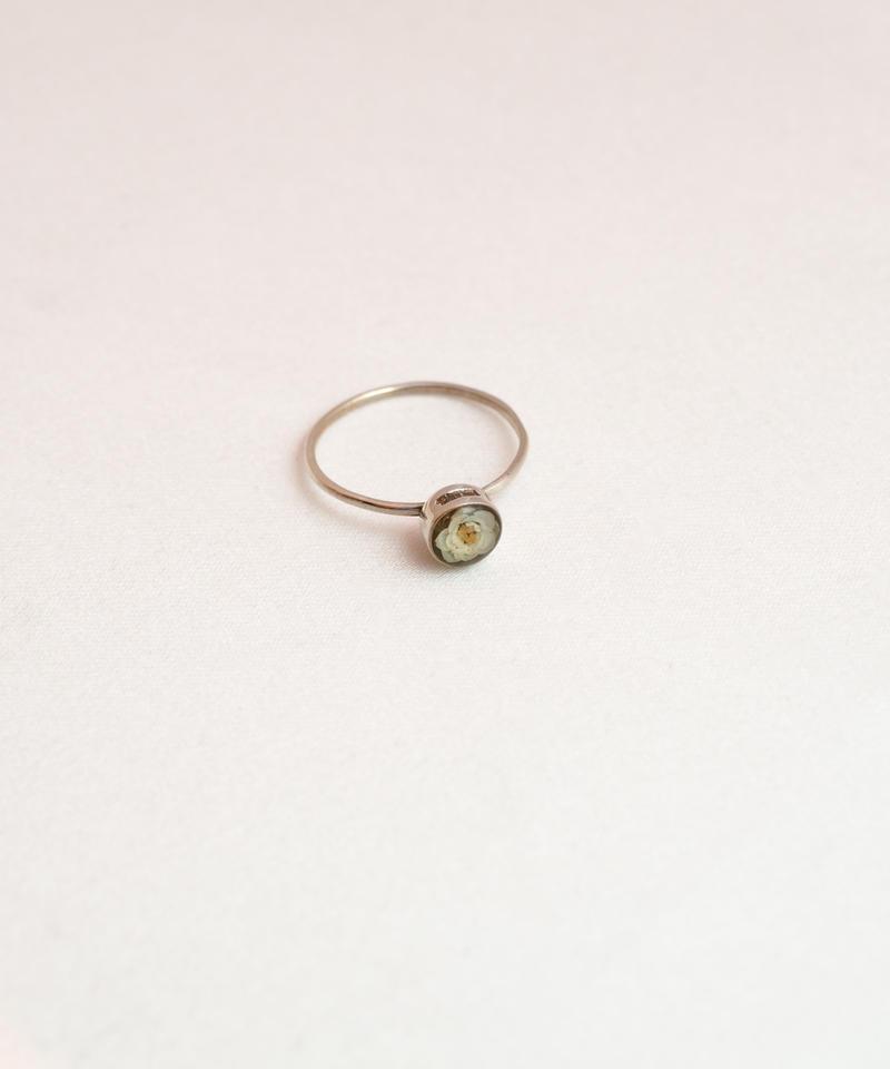 Viburnum Ring 1