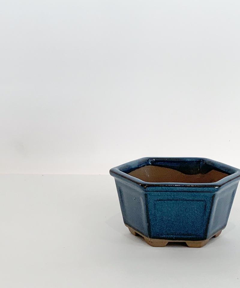 豆盆栽鉢 六角
