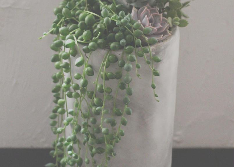 Green & Succulent Design  多肉植物の寄せ植え