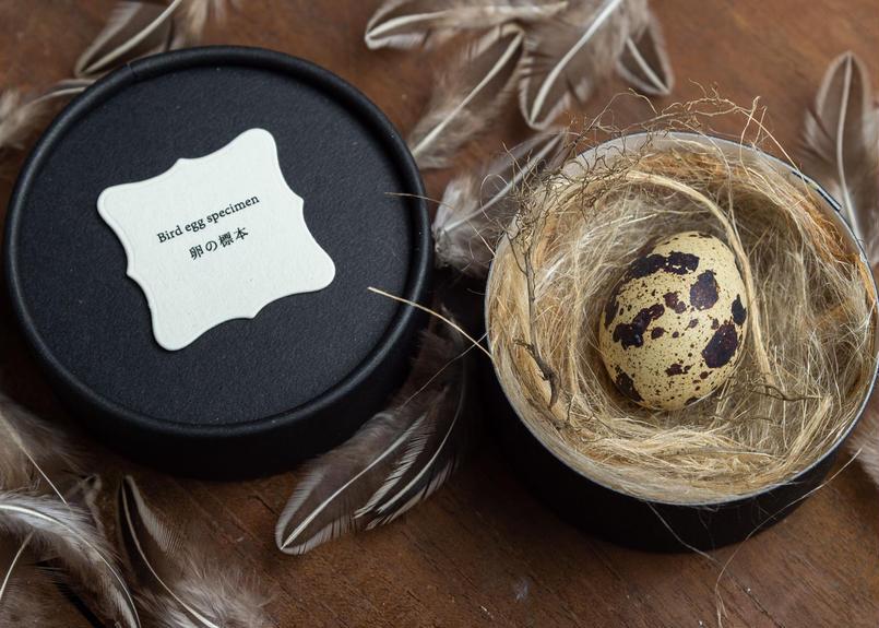 Bird egg specimen -ウズラの卵標本-