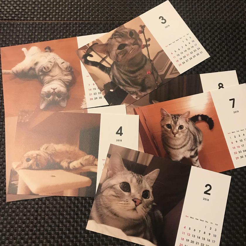 2018 ネコ卓上カレンダー