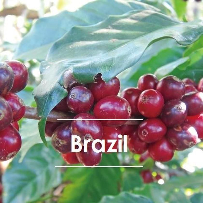 ブラジル  ダテーラ農園 200g