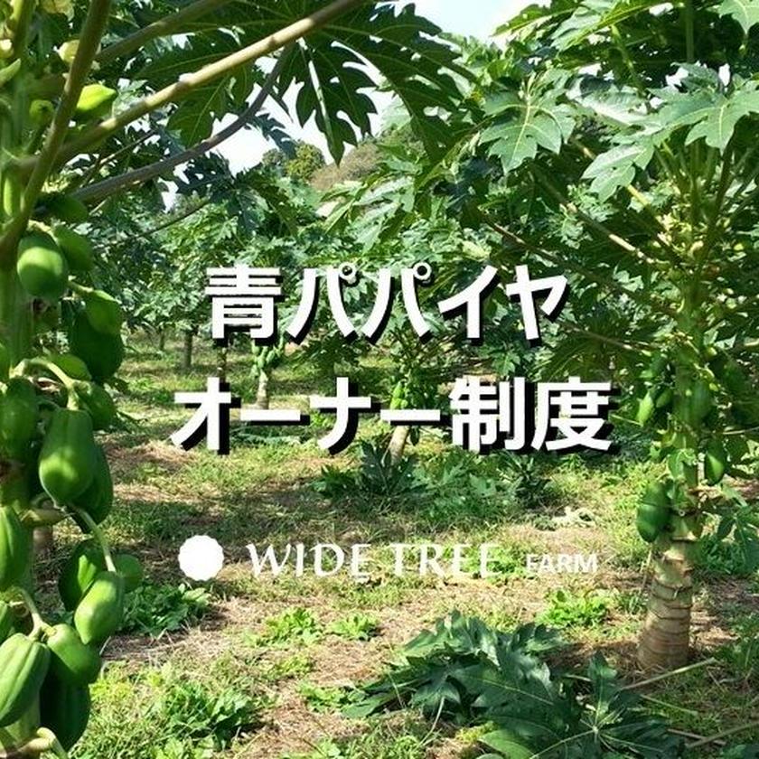 【1本】青パパイヤオーナー制度年間契約1本分  無農薬で育てお届け致します