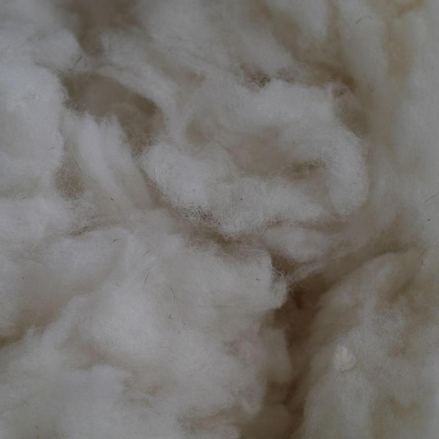 洗い済み羊毛:サフォーク種1kg