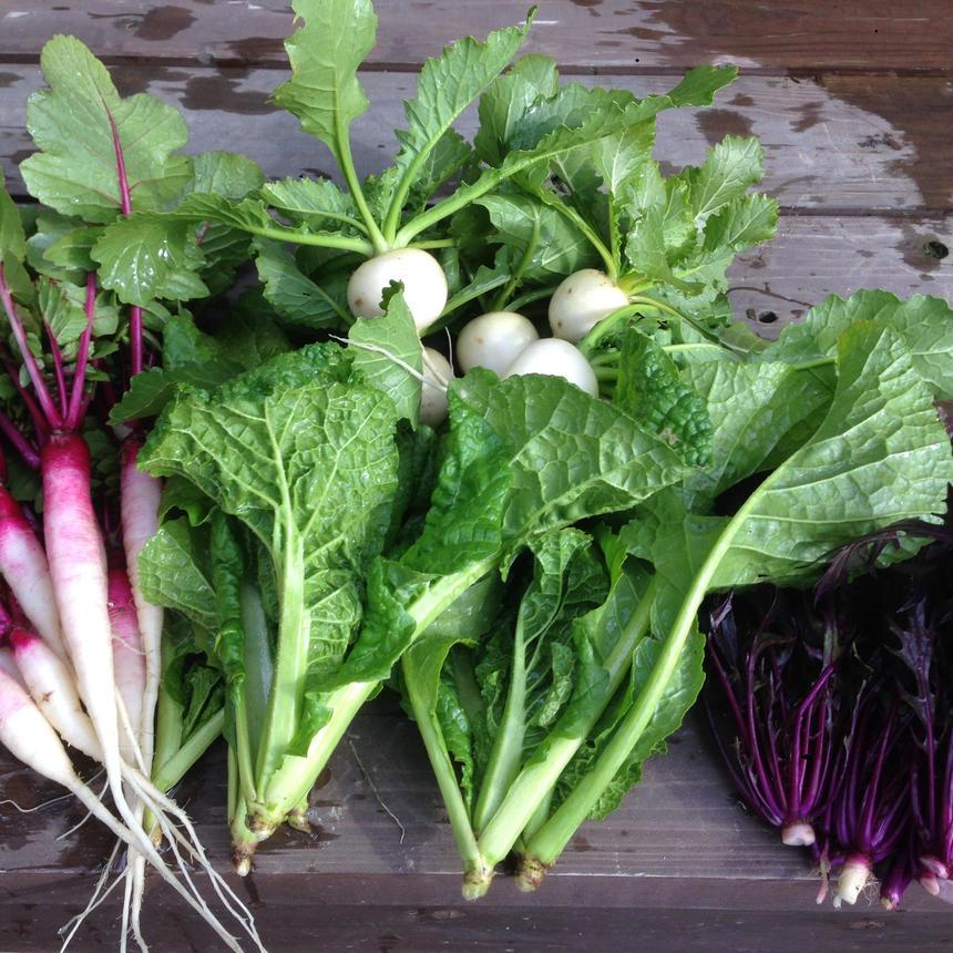 季節の伝統野菜おまかせセット