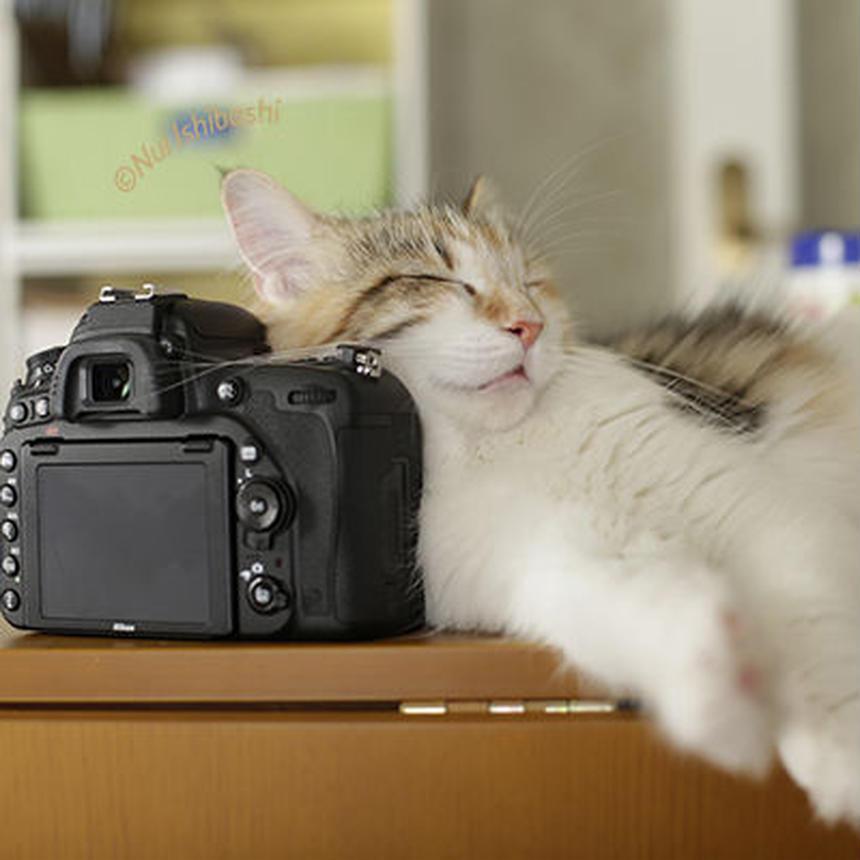 【出張】pet photo 〜5月のご予約〜
