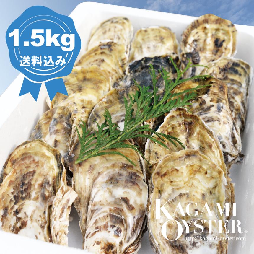 鏡オイスター 1.5kg(殻付マガキ・加熱調理用)