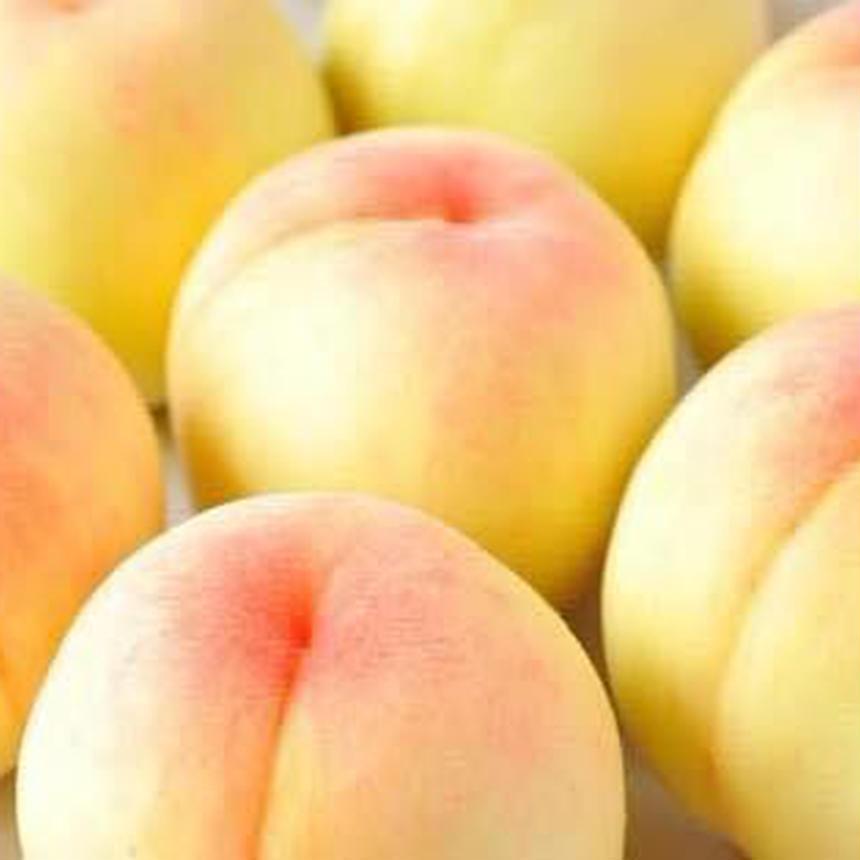桃の塩煮(500g)