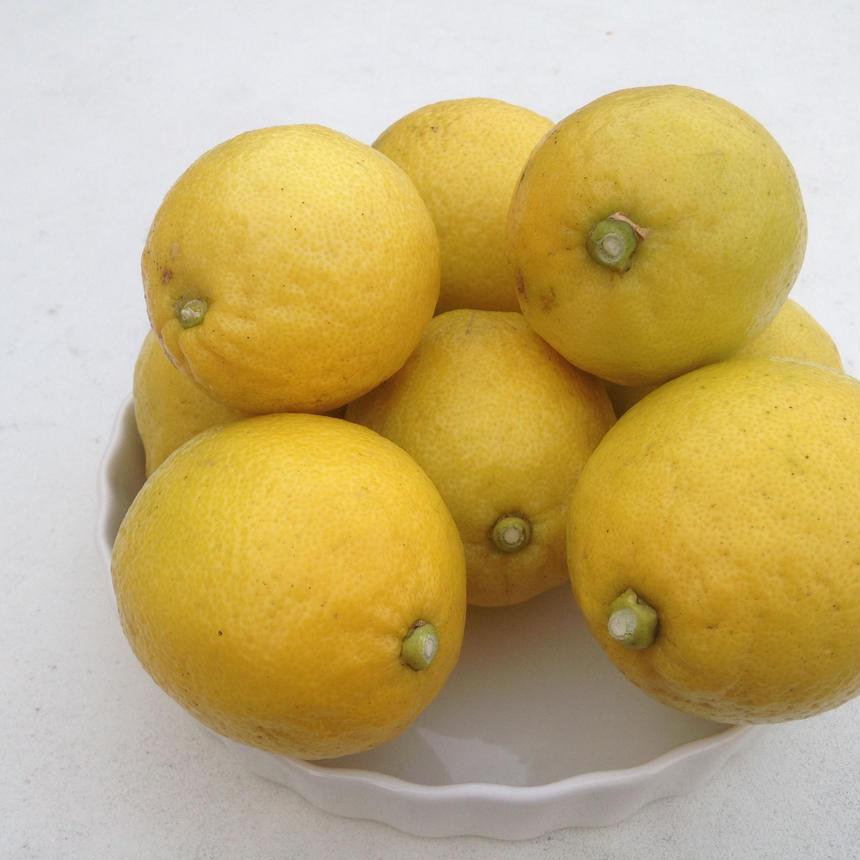 小豆島産 無農薬栽培レモン 1キロ 6こ~8こ