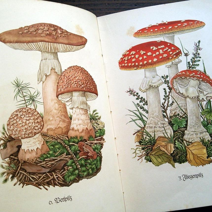 【再入荷】◆ドイツ インゼル文庫Nr.503<小さなきのこの図鑑>◆Das Kleine Pilzbuch