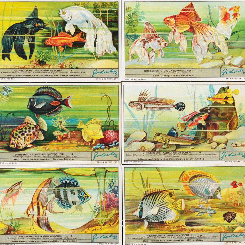1936年 LIEBIG◆小さなアクアリウム6種アンティーク・ビンテージカード