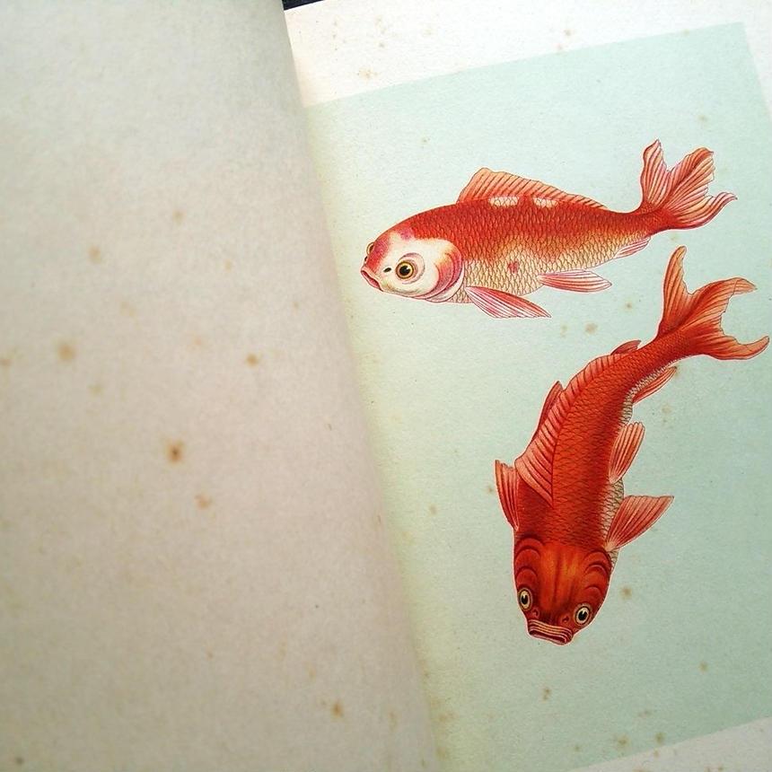 1935年ドイツ インゼル文庫Nr.255<小さな金魚の本>◆Der kleine Goldfischteich