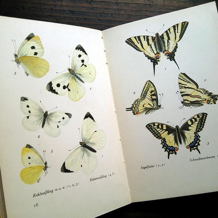 1940年ドイツ インゼル文庫Nr.213<美しい蝶の本>◆Das kleine Schmetterlingsbuch - Die Tagfalter