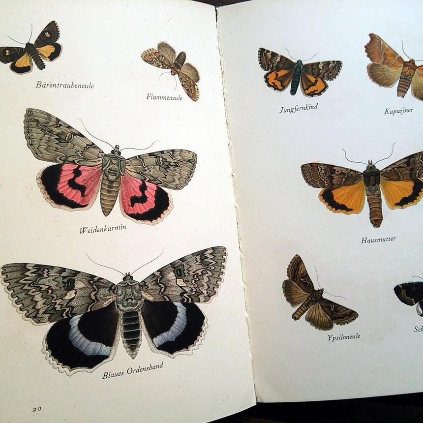 1936年ドイツ インゼル文庫Nr.226<小さな蛾の図鑑>◆Das kleine Buch der Nachtfalter