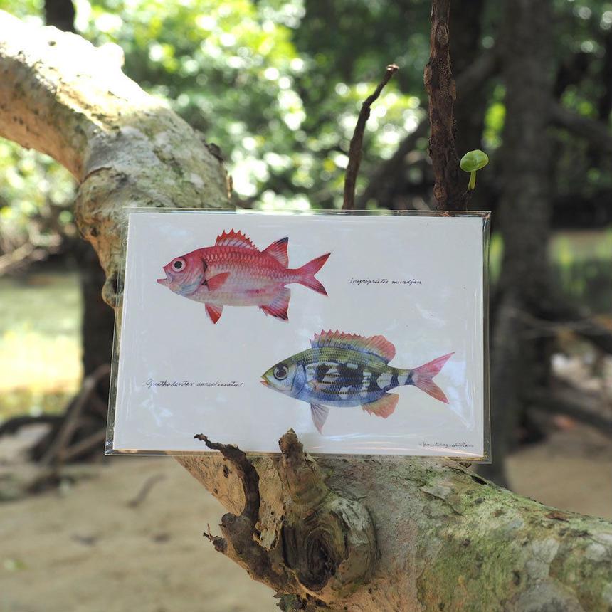 ポストカード5枚セット「黒潮魚の譜 B」