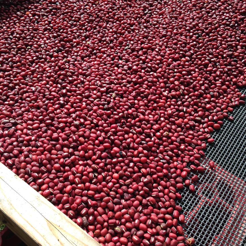 無農薬栽培・こだわりの天日干し おわて小豆 250g