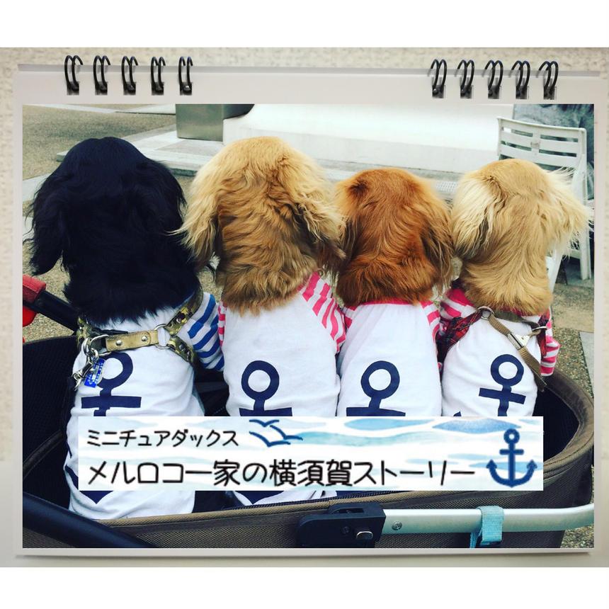 残りわずか【送料無料】2019年 メルロコ一家の横須賀ストーリー 卓上カレンダー