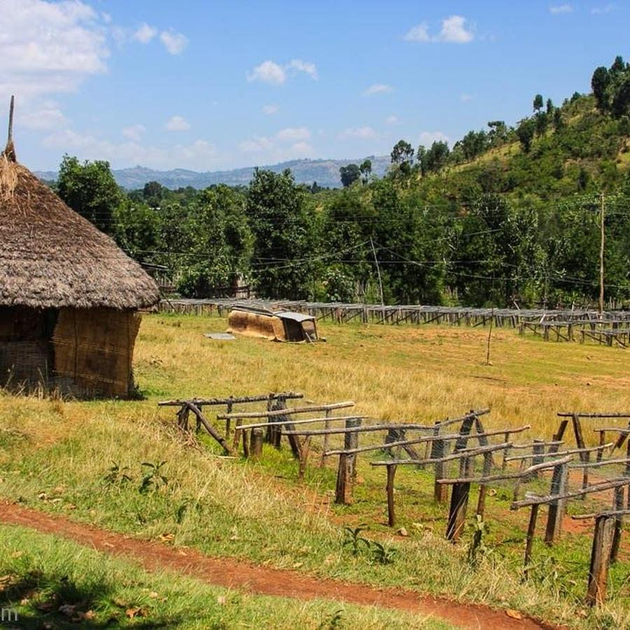 エチオピア / SIDAMO ORGANIC - 200g