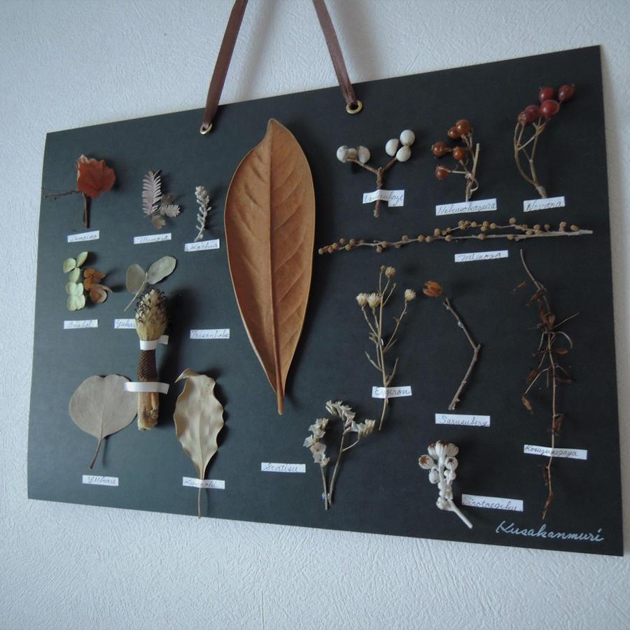 瀬戸内の植物標本