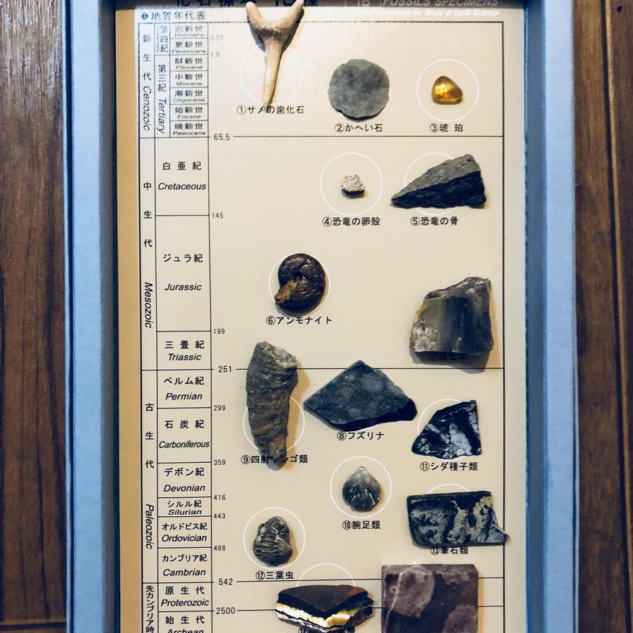 レンタル化石標本(3日間)