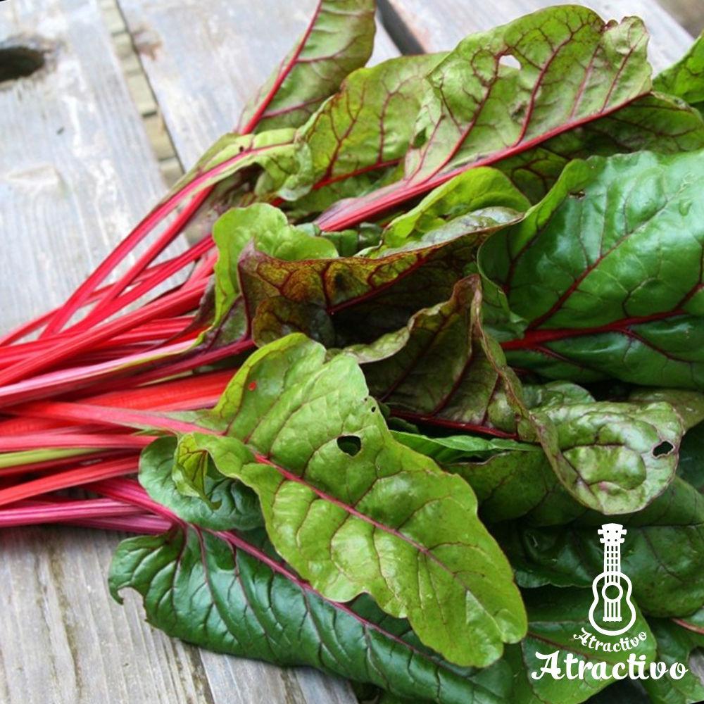 イタリア野菜・西洋野菜と種子通販・販売 アトラクティーボ            色鮮やかなイタリア野菜スイスチャードの種
