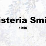 Wisteria Smith