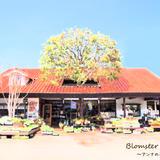 Blomster Anna~アンナの花屋~