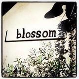 blossom online shop