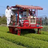 🌿  Organic Tea Garden  🌿  お茶  🍵