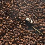 素材の甘みコーヒー 自家焙煎珈琲座長