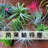 常葉植物園 Tokiwa Botanical-Garden / ティランジア(エアプランツ)専門販売