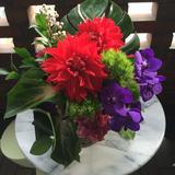 IRIS flower&colour