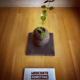 MODERATO ROASTING COFFEE