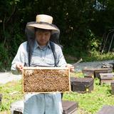 (株)渡辺養蜂場