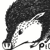 PECCARY BEER ONILE STORE
