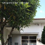 shigatsu no sakana