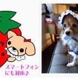 strawberrywagon