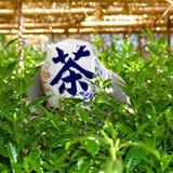 丸利 吉田銘茶園