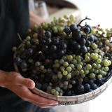 wineshop VINPLUS