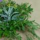 心に風|心と体と魂のための植物