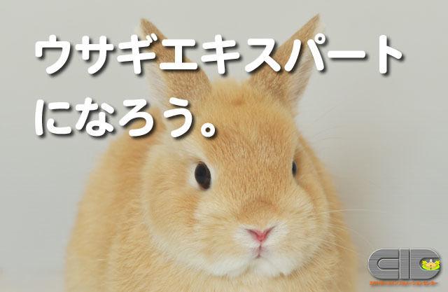ウサギのためのその1