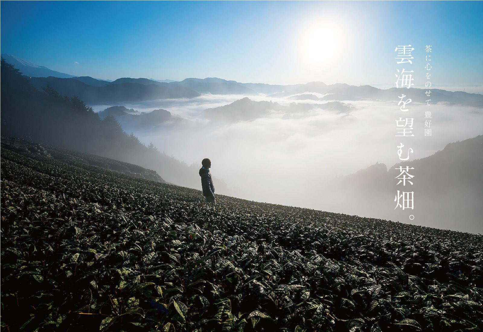 茶に心をのせて 豊好園。