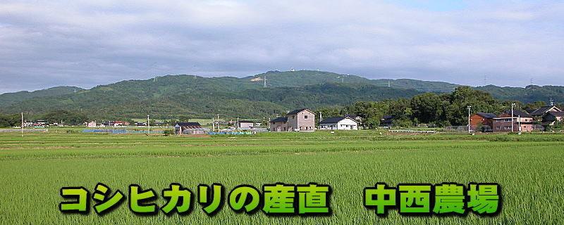 弘宝米の中西農場へようこそ!