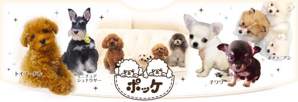 犬用品・犬グッズ通販ポッケ