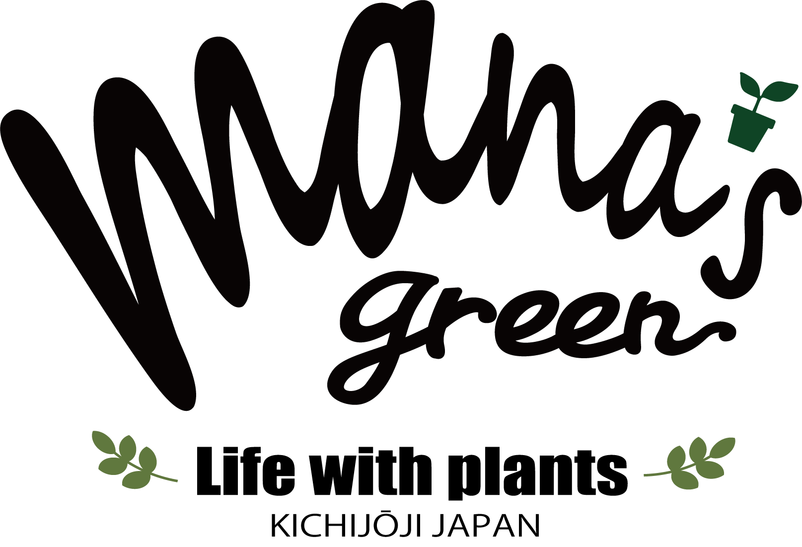mana's green:パキポディウム・多肉植物販売|マナズグリーン