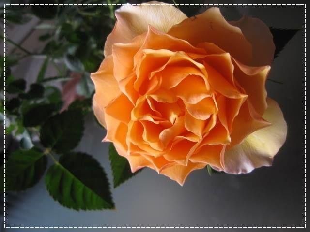 Lapi Rose>> 消ゴムはんこのお店