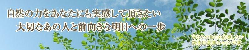 モリンガ茶の諸喜田農園