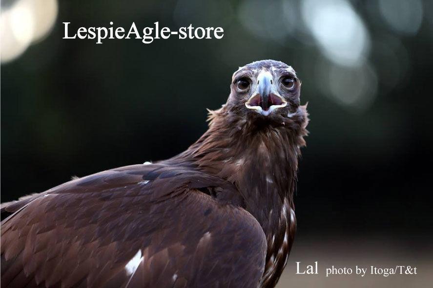 LespieAgle-store